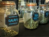 Legal Marijuana Tied to Crash Increase