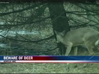 Video Safety Tip: Averting Vehicle-Deer Crashes